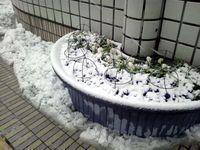 120229_上野03.JPG