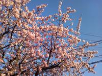 120404_桜01.jpg
