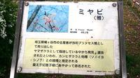 浅草06.jpg