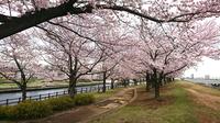 赤羽桜堤02.jpg